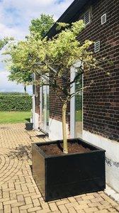 Steigerhouten plantenbak